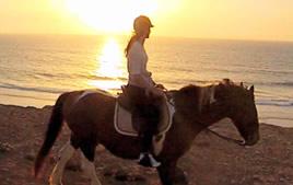 Fanny's horses