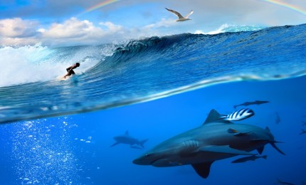 """""""Is surfing dangerous?"""""""