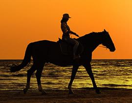 Los caballos de Fanny