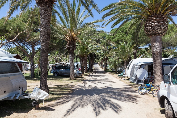 Caravans and motor homes on a camping site with palm trees. Andalusia, Spain