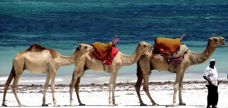 """""""Paseo en Camellos ¡Como Auténticos Reyes Magos!"""""""