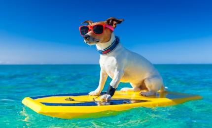 """¿Surf? ¡Consejos para Remar como un Profesional!"""