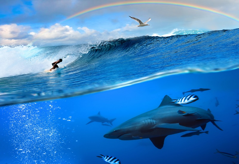 """¿Practicar surf es peligroso?"""